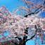 fuji_nikki