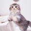 id:fuko_sorachi