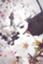 id:fuku03220