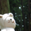 id:fukui-honyaku-bc