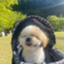 id:fukumarukun0822