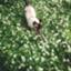 gattoverde15