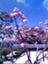 id:geko_sishibuhuo