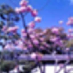 geko_sishibuhuo