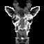 giraffe2272