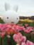 id:gogoyoshi5
