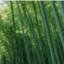 green_bamboo