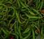 green_chili