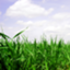 id:greenarchi