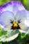 id:greenisland0526