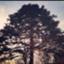 id:gumigam
