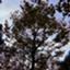 gymnopedie_99