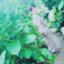 id:ha-nmama30