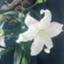 id:hana-haru