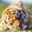 id:happy-tiger