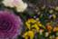 id:happyflowertrees
