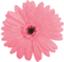 id:harapekoaomusi2020