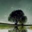 id:harpy