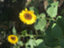 id:haru102015129