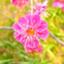 id:haru_456