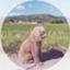 haru_poco