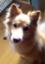 haru_sny