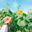 id:haruharu316