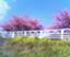 id:haruhi-orikasa