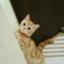 harujion_lm