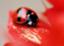 id:haruka_4477