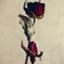 id:hase_gawa