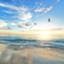 id:hawthorn_111