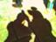 id:hazuki1928