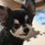 id:hbdog