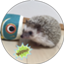 hedgehog_chacha