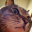 id:heidiironhead