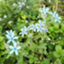 id:herbfarm
