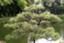 id:hideki-sansho