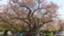id:higashisonoda
