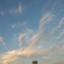 id:higekuro