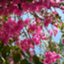 id:higurashi-note