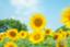 id:himawari1026
