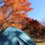 id:himawari823