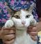 hina_geshi