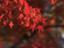 hirakantera