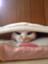 id:hirame3594