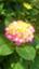 id:hkoffice116