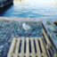 id:honami-araki