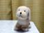 id:ichiyu
