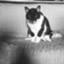 ikonta_doumei